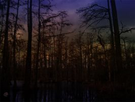 In The Swamps - Dusk by S-B-K