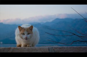 The Cat by ivancoric