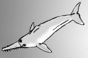 Sawtoothed dolphin sketch by Zimices