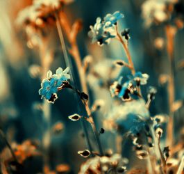 ...forget-me-not... by BaxiaArt