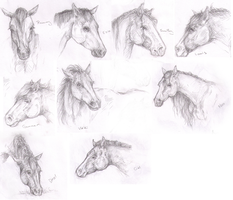 Horse Sketchdump by Anonymous-Shrew