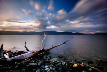 Driftwood on the Rocks by shiftline