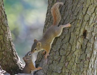Two Squirrels by PhotografikEndeavors