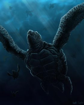 Sea turtle by Ruth-Tay