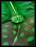 Green Supreme.... by Pjharps