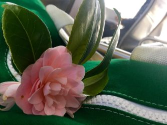 Camellia on Bus (2) by Clare-Prime-of-Ultra