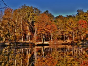 Rieve's Pond Autumn 2016 by Matthew-Beziat