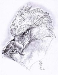 Traditional Drawing Eagle Drawing!! by Halasaar01