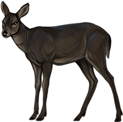 Companion: Whitetail Doe Black by reviro