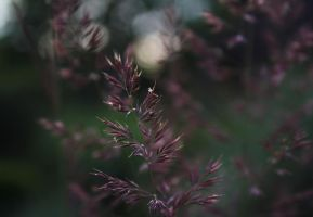 Inflorescence of grass by m-gosia