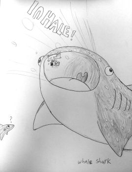 Doodle - Whale shark Inhale by Rotommowtom