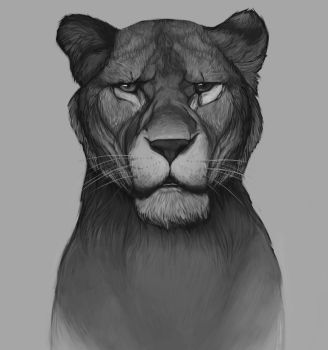 Lioness by amanana