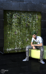 Mosswall by Linwelly
