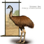 Emu Study Outside View by Draiona