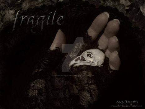 Fragile by LostMemoryOfADream