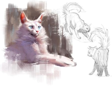 Cat Studies by TehChan