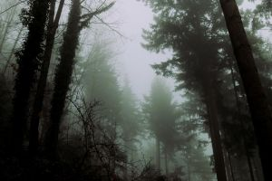 The grim forest IV by Malleni-Art