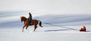 Equine sledging ... by Jutyna