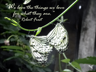 The things we love by Leopard-Enya