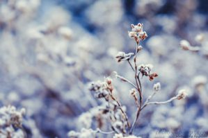 The hues of winter by FeliDae84