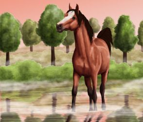 Horse in water by Colltify