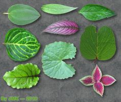 JMK's Leaf Texture Pack by JohnK222