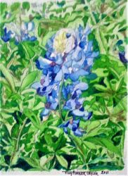 An Impression of Bluebonnets by Orchid-Black