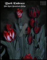 Dark Embrace For Lisa's Botanicals Tulips III by NapalmArsenal