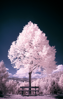 Cotton Candy Land - II by sorny