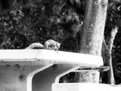Squirel on Table 1910s by Fiction-Art-Author