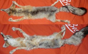 Gevorg the Kit Fox SOLD by galianogangster
