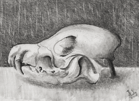 Fox skull by SulaimanDoodle