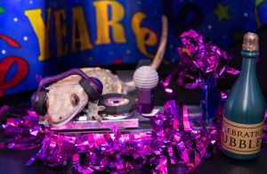 Fabio - New Years Party DJ - 3271 by creative1978