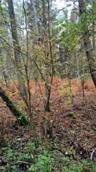 Curonian Spit :October: 13 by J-dono