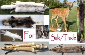 Fur for Sale or Trade by galianogangster