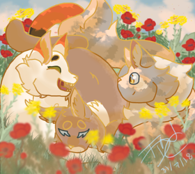 Poppies and mustards by theydidnevercare