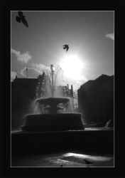 Free As A Bird by photocell