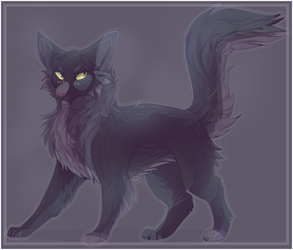 Warrior Cats| Hollyleaf by DragonWarriorCat