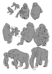 Life drawings of gorillas by ohmygiddyaunt