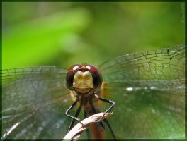 'Smile for the camera...' by Irena-N-Photography