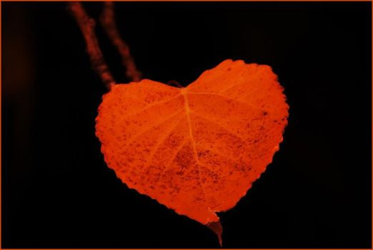 Heart Shaped Leaf by vex3r