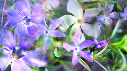 The Periwinkle's Waltz by RebeccaTripp