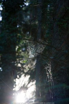 Spiderweb in the Wood by RedMax88