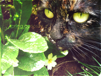 Spring Curiosity by Kezzi-Rose