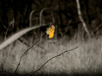 The Leaf by Gundross