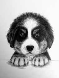 Bernese Pup by TheKissingHand