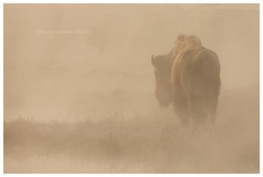 In The Mist by Nate-Zeman