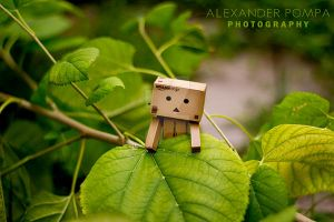 Danbo Goes Exploring by AlexanderPompa