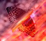 The Butterfly Effect by ChrissieCool
