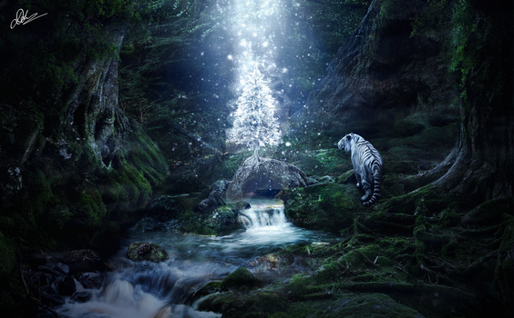 Christmas in the forest by AnhLe-Photography